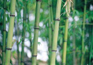 Die Socken bestehen zu 80% aus Viskose welche wiederum aus Bambus gewonnen wird.
